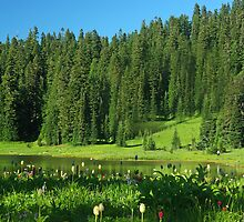 Meadow at Mount Rainier by Karen Fahey