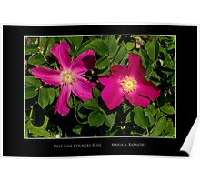 Deep Pink Country Rose - Cool Stuff Poster