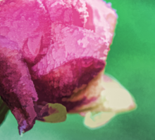 Closeup of a pink rose covered with frost Sticker