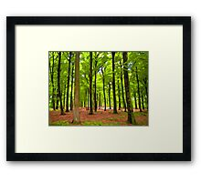 Beautiful lush Forest landscape Framed Print