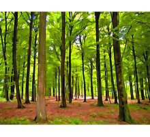Beautiful lush Forest landscape Photographic Print