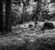 Norwegian forest by Scandinavian