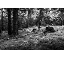 Norwegian forest Photographic Print