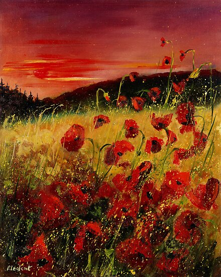 red poppies  by calimero