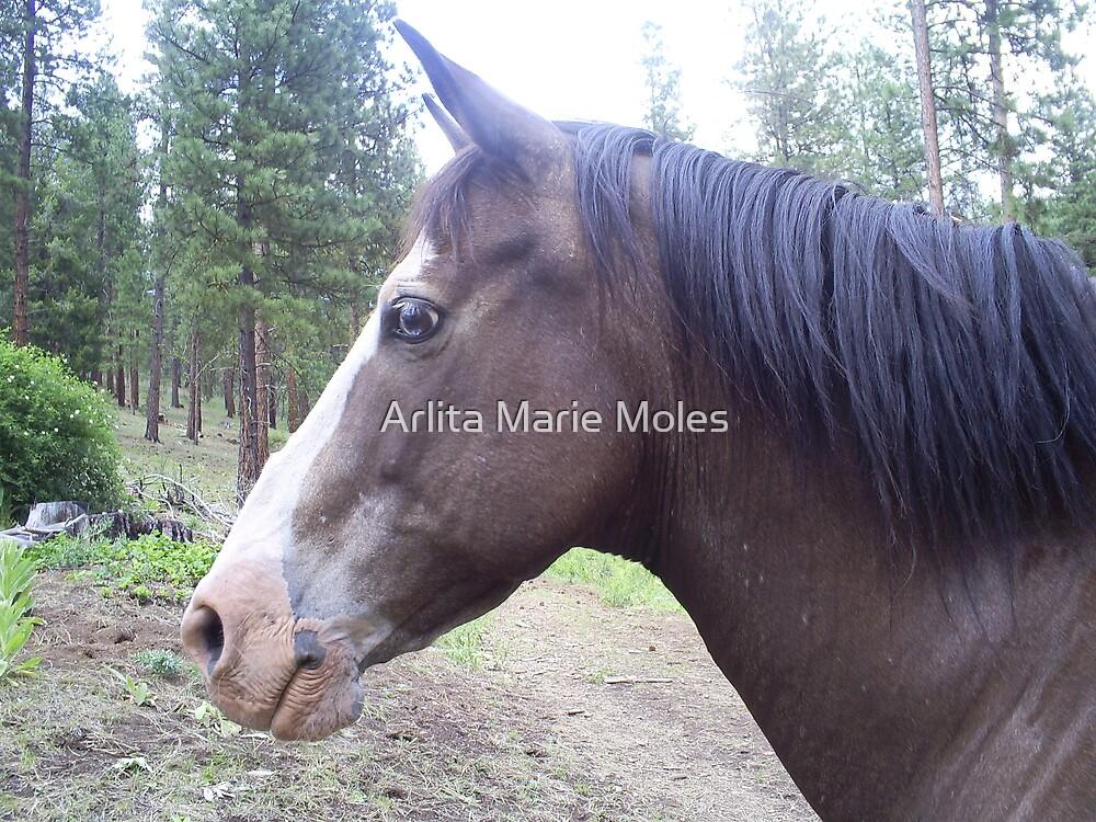 Horses by Arlita Marie Moles