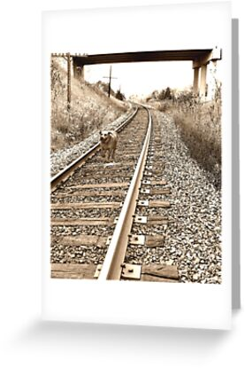 Racing the Train by nikspix