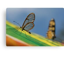 wings of glass Canvas Print