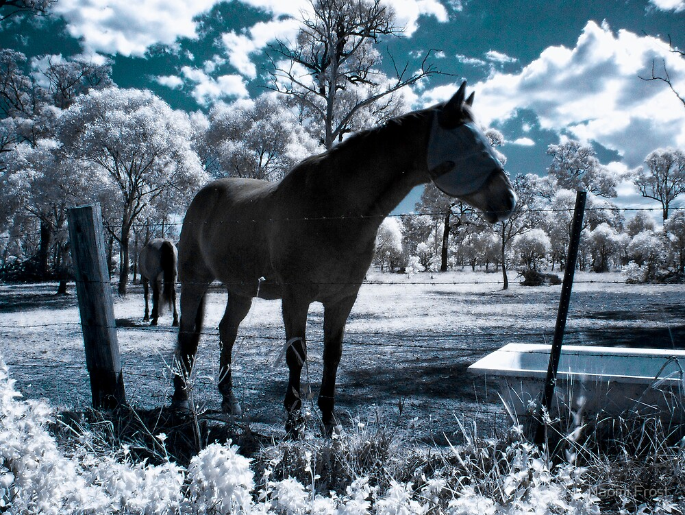 Snow Ponies by Naomi Frost