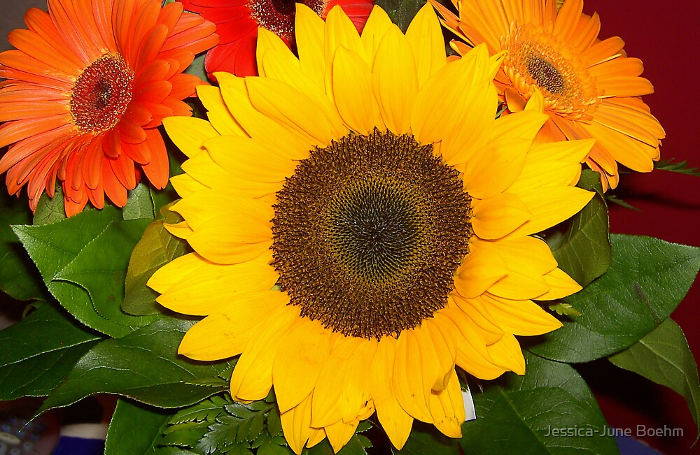 Sunflower  by Jessica-June Boehm