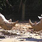 Nosey Animals by Chris Hanlon