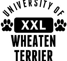 University Of Wheaten Terrier by kwg2200