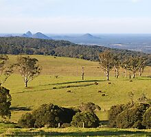 Mount Mee looking towards the Glasshouse Mountains by Judy Harland