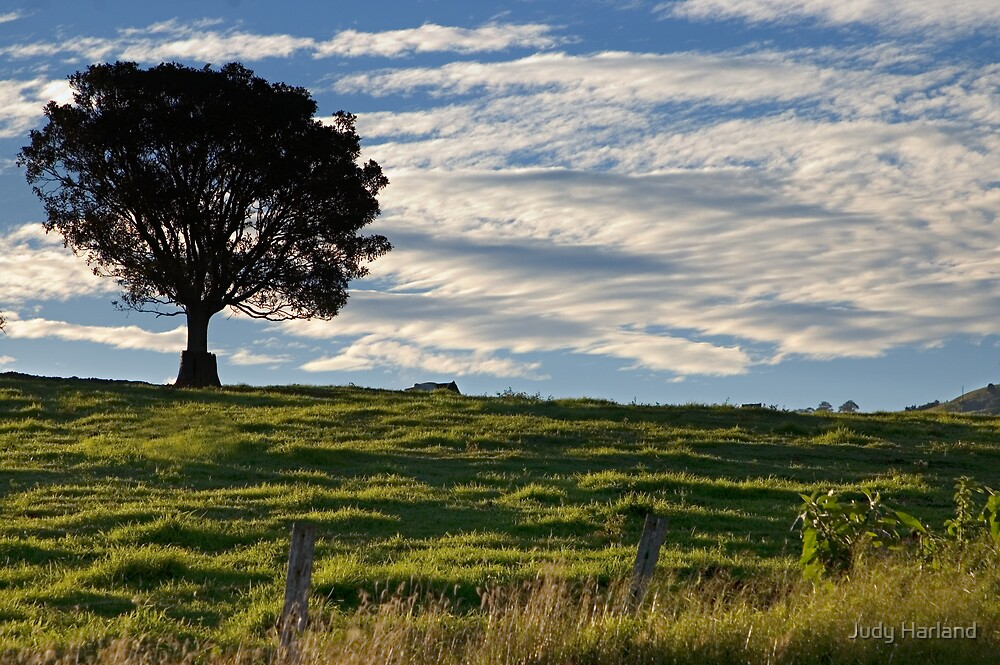 Tree & Clouds by J Harland