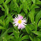 Happy Flower by Chris Hanlon