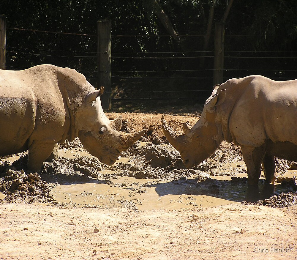 A Rhino Hello by Chris Hanlon