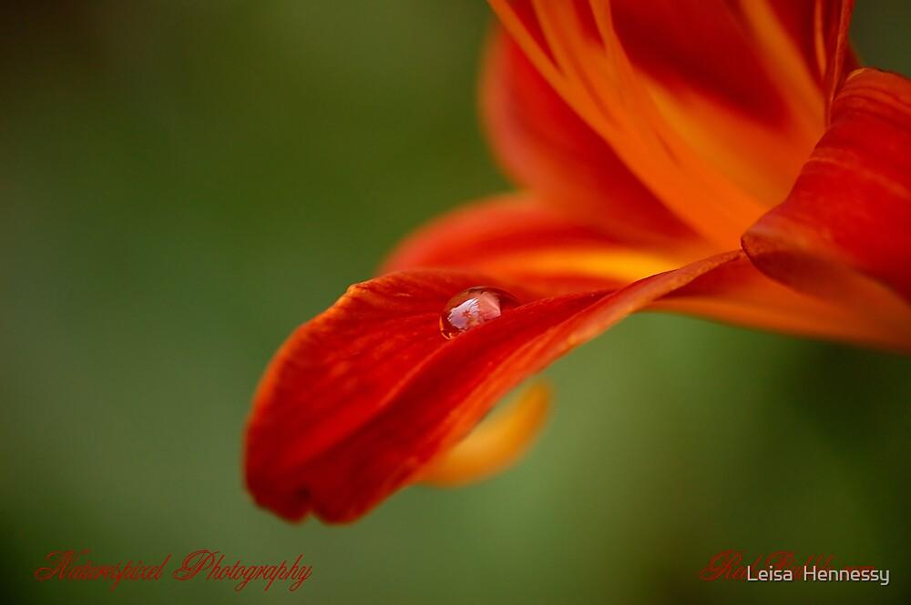 Flower Power Screensaver by Leisa  Hennessy