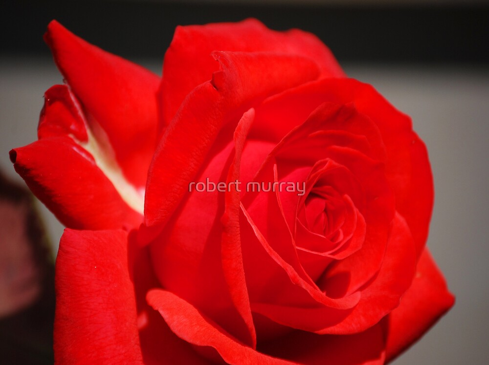 A touch of white by robert murray
