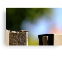 Front Yard Fence Lizard Canvas Print