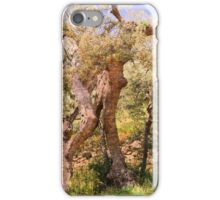 The old Olive tree iPhone Case/Skin