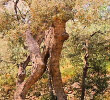 The old Olive tree by julie08