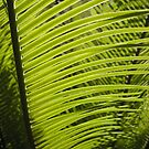 Cycad by Ye Liew
