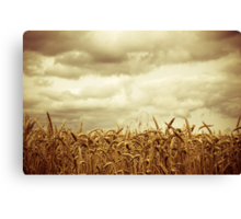 Fields of Gold 2  Canvas Print