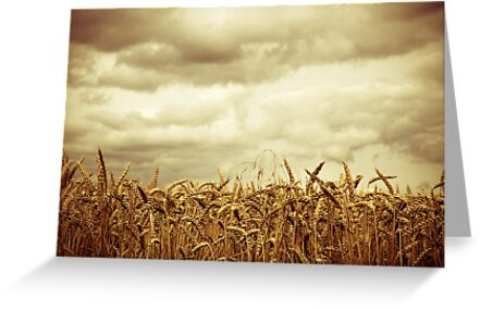 Fields of Gold 2  by SRaphael