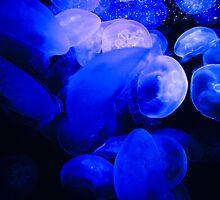 Jellyfish by Martin Reddy