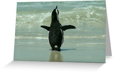 Penguin on Beach by countrypix