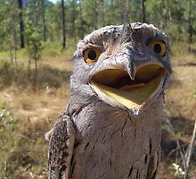 Frogmouth by Roboftheland