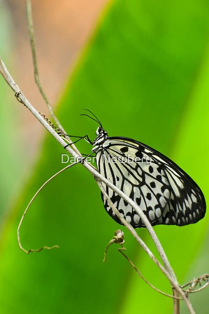 butterfly series one by Darren Newbery