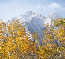 snowy morning in fall by Amber Carter