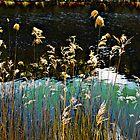 Tidal River by mawaho