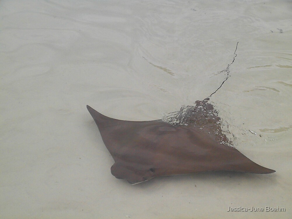 Stingray by Jessica-June Boehm