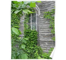 Nature's Window Covering Poster