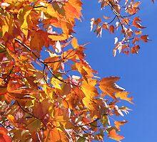 Seasons of Change by dragonflypoet