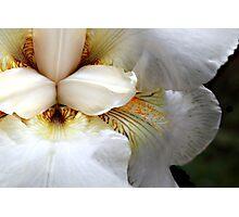 Sore flower bleeding Photographic Print