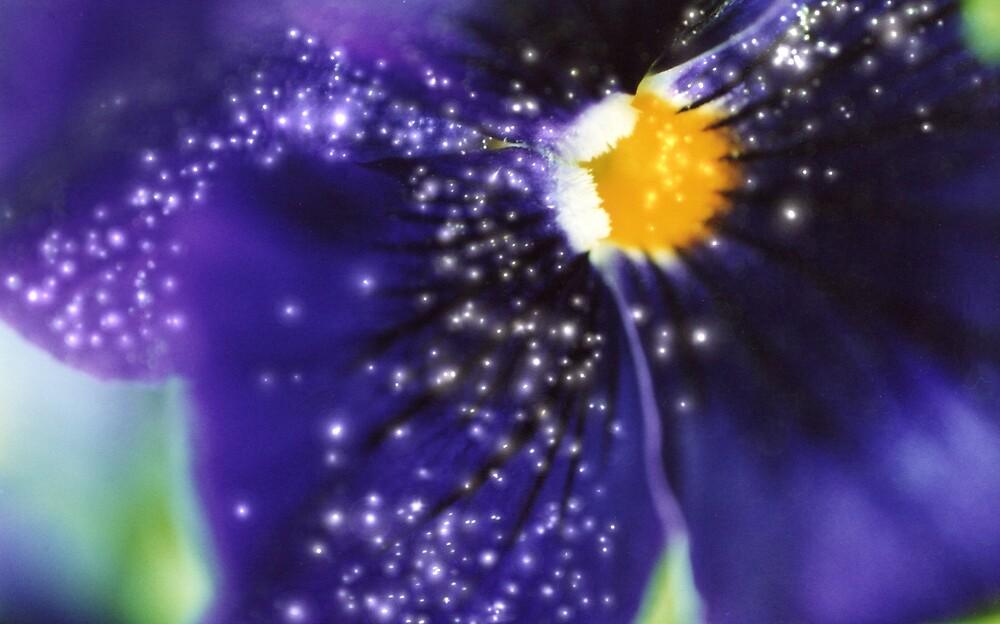 interstellar petals by Chelsea Kerwath