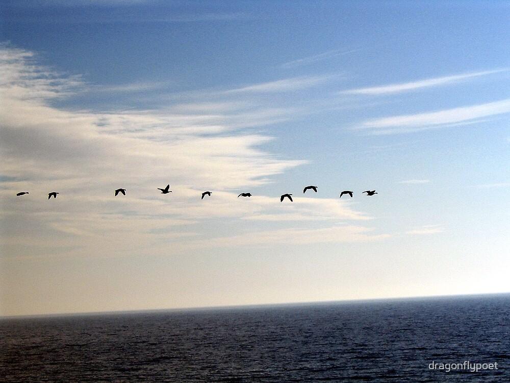 Migration by dragonflypoet