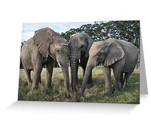 Trio of African elephants  Greeting Card