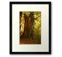 Tree Man  Framed Print