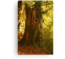 Tree Man  Canvas Print