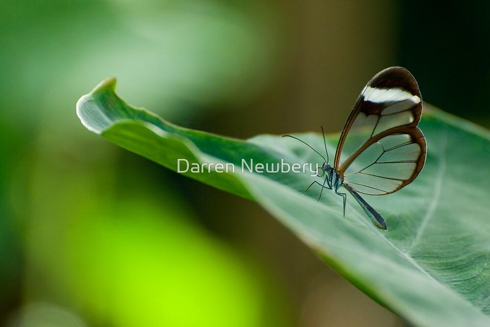 Clear Winged by Darren Newbery