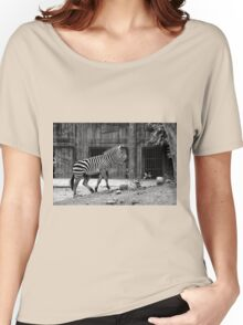 Zebra at Calcutta Zoo Women's Relaxed Fit T-Shirt
