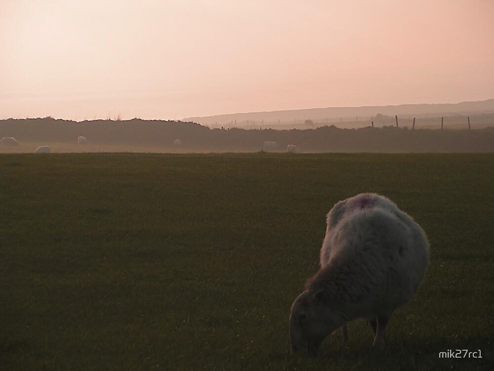 rhossili sheep by mik27rc1