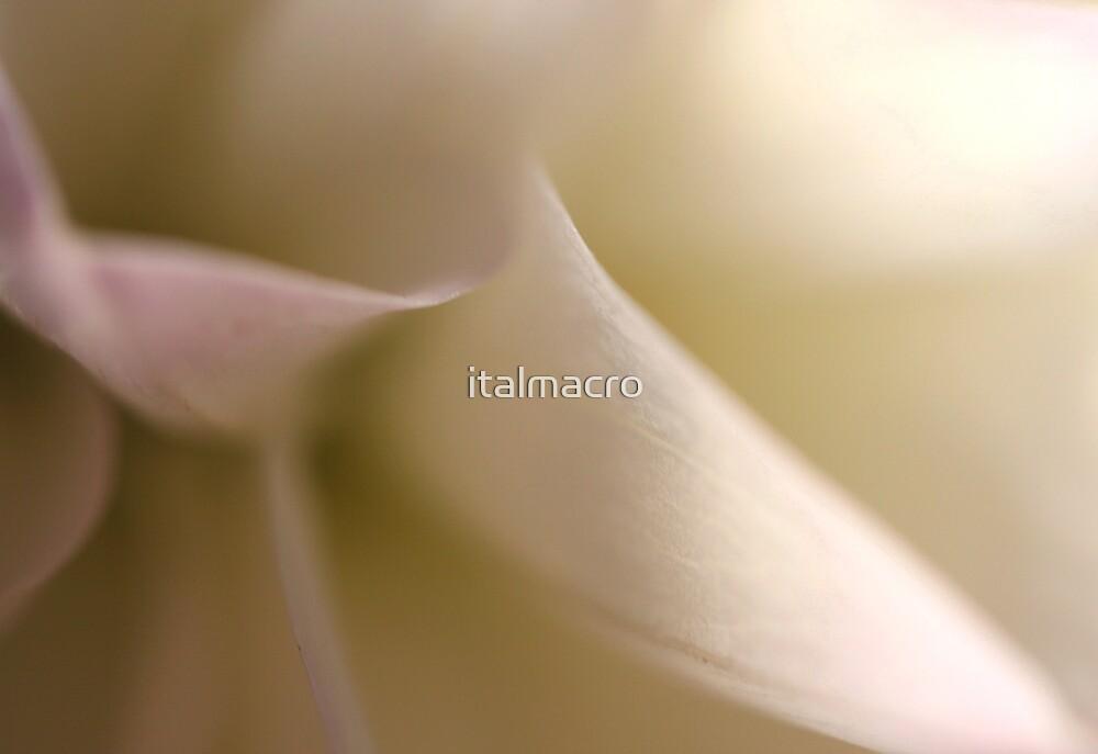 coy by italmacro