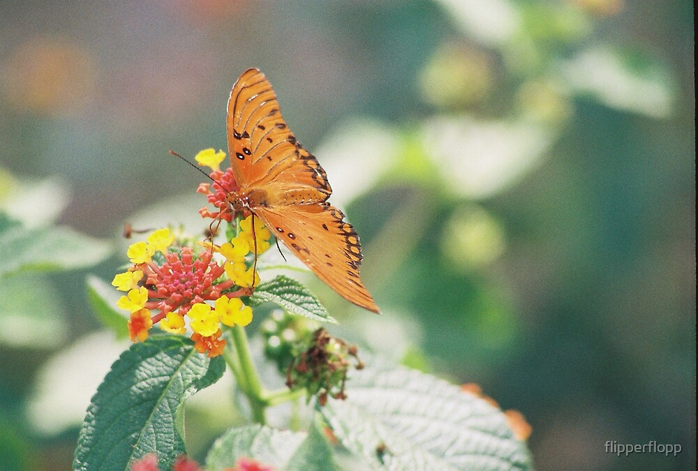 simply butterfly by flipperflopp