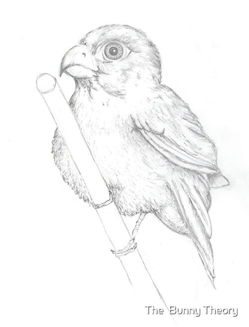Drawing of a bird by The  Bunny Theory