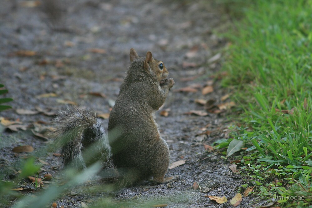 Eating Squirrel by Jim Roche