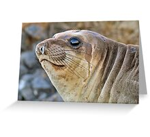 Young female Elephant Seal profile  Greeting Card